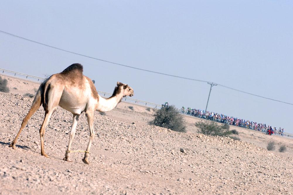 Le peloton visite le désert qatari