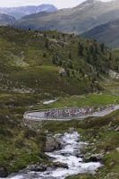 Le peloton dans les Alpes
