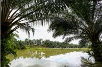 Sublime paysage du Tour de Langkawi
