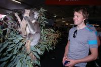 Edvald Boasson-Hagen contemple un koala