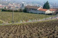 Le peloton à travers les vignes
