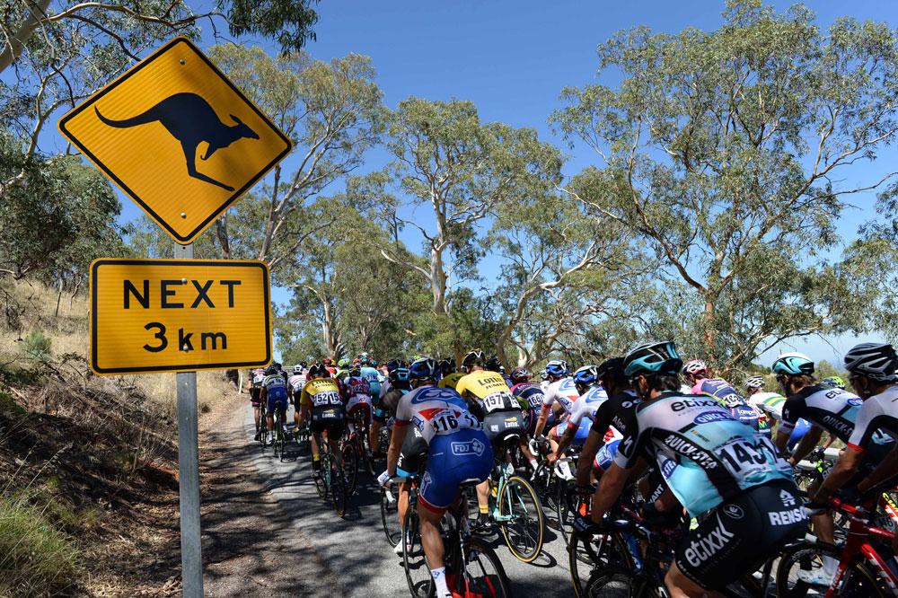 Le peloton sur les routes du Tour Down Under