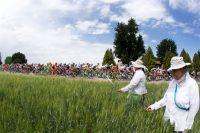 Le peloton du Giro traverse la Vénétie