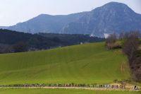Le peloton devant les Apennins
