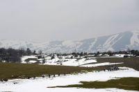 Le peloton dans la neige