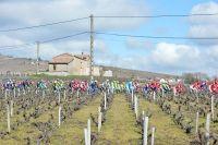 Le peloton dans les vignes