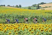 Le peloton du Tour de France