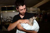 Thomas De Gendt a adopté un kangourou