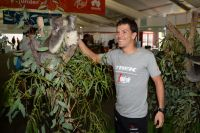 Julian Arredondo amuse un koala