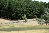 Le peloton parcourt les routes australiennes