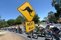Des dangers d'un genre un peu particulier sur les routes du Tour Down Under