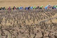 Le peloton de Paris-Nice à travers les vignes