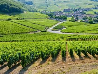 Bourgogne-1