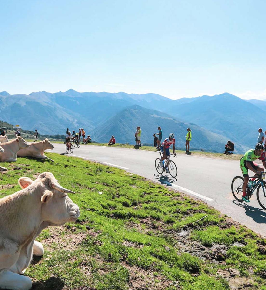 Marmotte GF Pyrénées