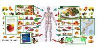 Les régimes alimentaires supportent-ils les écarts ?